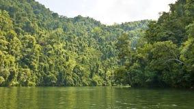 Jungle-river. Part of river dulce, guatemala Stock Image