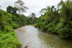 Jungle river in borneo Stock Photos