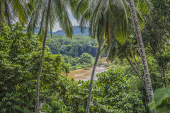 Jungle river Royalty Free Stock Photo