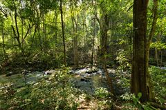 Jungle and river in Inthanon Park Royalty Free Stock Image
