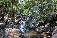 Jungle and river in Karnataka. India Stock Photos