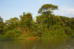 Jungle River Landscape with Blue Sky Royalty Free Stock Photo