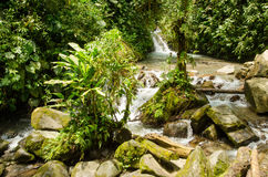 Jungle. River in a jungle in Monte, Ecuador royalty free stock photography