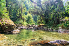 Jungle and River Stock Photography
