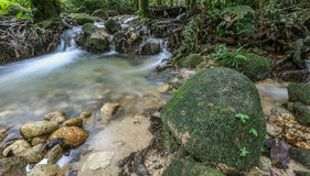 Jungle Riverscape III Royalty Free Stock Image