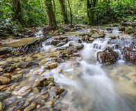 Jungle Riverscape V Stock Image