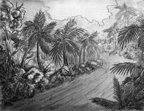 Jungle road. This is a road leading through the jungle. Pencil drawing Stock Image