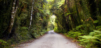 Jungle Road. Dirt road going through thick, lush jungle stock photos