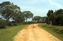 Jungle road Stock Photo