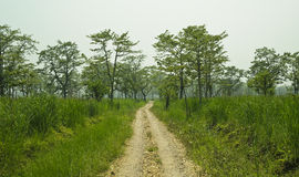 Jungle road. In the national park Chitwan Royalty Free Stock Photography