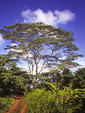 Jungle road. With blue sky and green vegetation in Tanzania Royalty Free Stock Images