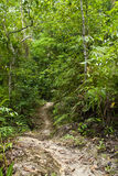 Jungle road Stock Image