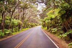 Jungle Road. Road going through jungle Hawaii Big Island Royalty Free Stock Photo