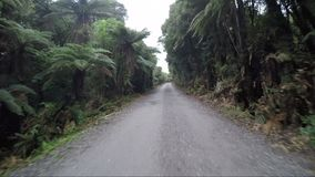 Jungle road in Hokitika west coast of southland New Zealand most popular traveling destination stock video footage