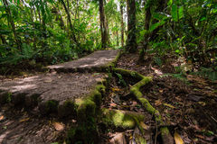 Jungle road. Stock Images