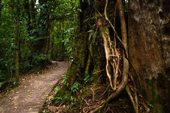Jungle road. Image a road in the jungle Royalty Free Stock Photo
