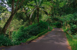Jungle Road. Narrow paved road and a bridge in tropical jungle (the road to Hana in Maui Royalty Free Stock Photography