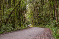 Jungle road in New Zealand Stock Image