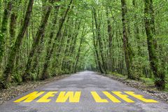 Jungle road to new life. New life text written on jungle road with tall tree two side, green road royalty free stock photo