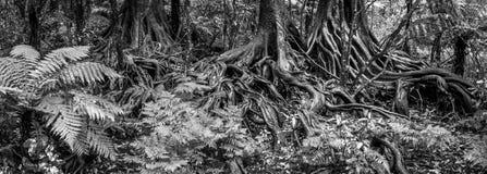 Jungle roots Stock Photos
