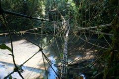 Jungle rope bridge. Rope bridge crossing a river in the Borneo jungle Royalty Free Stock Image