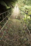 Jungle rope bridge Stock Image
