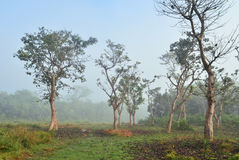 Jungle in Royal Chitwan National Park Royalty Free Stock Image