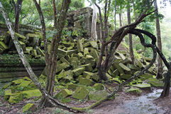 Jungle ruins Cambodia. Jungle ruins with vine in Cambodia Royalty Free Stock Photos