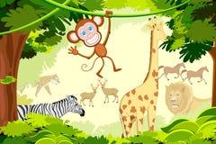 Jungle Safari. Illustration of different animal in jungle safari Stock Photo