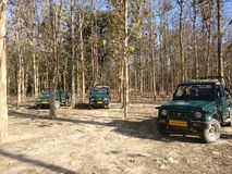 Jungle safari on jeep Stock Photos
