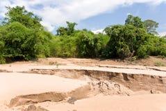 Jungle and sandbar Royalty Free Stock Image