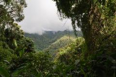 Jungle. Scene with fog along the top, near Caracas, Venecuela Stock Image