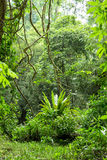 Jungle scene Stock Images