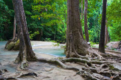 Jungle Scenery. Peaceful scenery in the jungle, Kanchanaburi province, Thailand Royalty Free Stock Photography