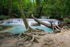 Jungle Scenery. Peaceful scenery in the jungle, Kanchanaburi province, Thailand Royalty Free Stock Image