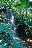 Jungle Scenery - Waterfall. A very exotic jungle scenery with plants and water royalty free stock image