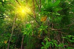 Jungle Stock Photos