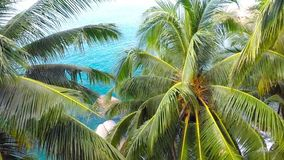 Jungle. Sea. Aerial shot. Close up of palm frond. Aerial shot of the jungle and the bay stock video footage