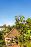 Jungle Shack Vertical View Stock Image