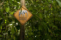 Jungle Sign: Elephant Crossing Royalty Free Stock Images