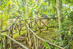 Jungle Staircase Royalty Free Stock Photos