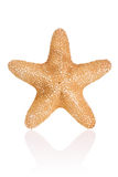 Jungle Star Royalty Free Stock Images