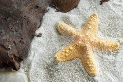 Jungle Starfish Stock Photo