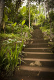 Jungle steps Stock Image