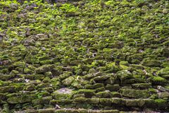 Jungle Stone Stairs. Ancient staircase covered in green jungle plants Stock Images