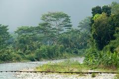 Jungle storm Stock Photo