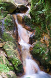 Jungle stream Stock Photography