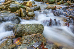 Jungle Stream II Royalty Free Stock Images