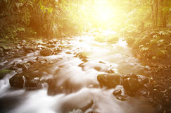 Jungle stream Stock Image