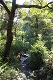 Jungle Stream stock photography